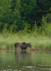 moose1tr